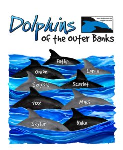 Outer Banks Center For Dolphin Research To Promote The Conservation Of Bottlenose Dolphins In The Outer Banks